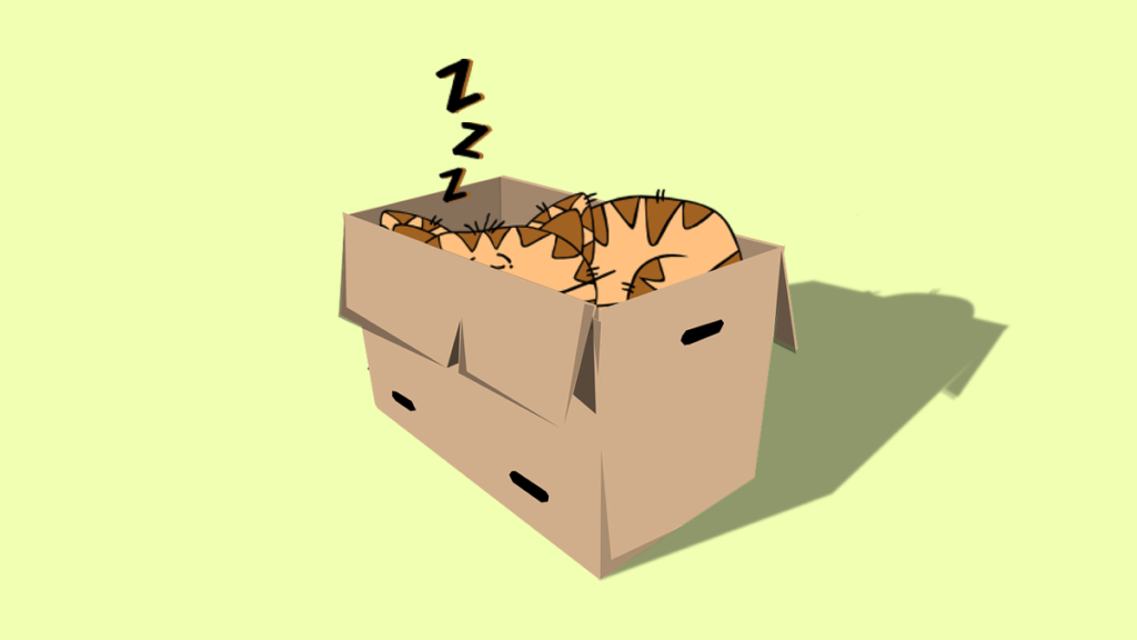 поиск кошки в коробках, Ищем кошку