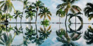 Пальмы отражаются в воде. В палиндроме буквы тоже отражаются относительно центрального символа.