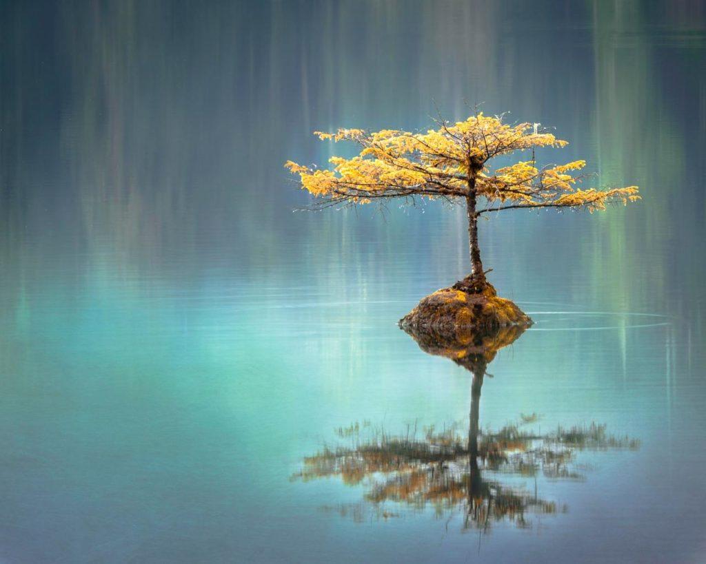 Дерево зеркально отражается в воде