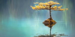 tree with its reflection