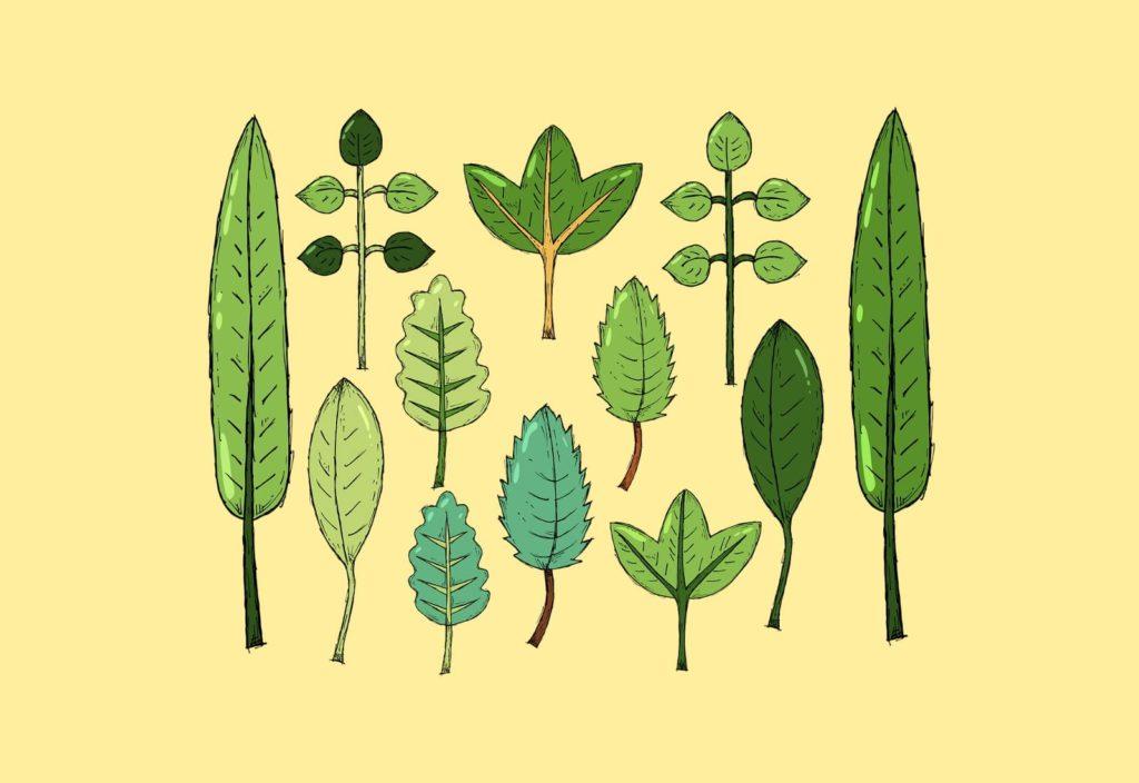 Листья деревьев разных видов