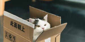 cat box1